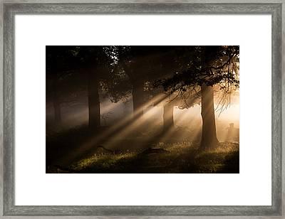 Richmond Park Framed Print by Ian Hufton