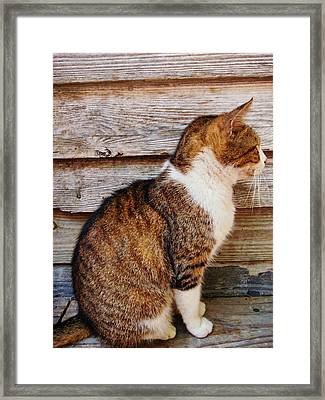 Ricky Framed Print by JAMART Photography