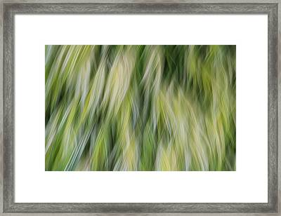 Ride The Wind Framed Print by Rachel Cohen