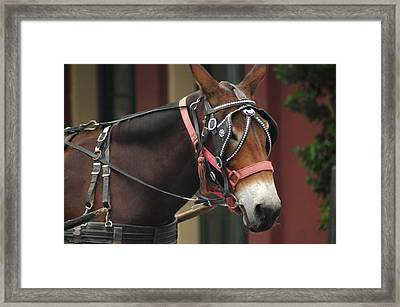Riding New Orleans Style Framed Print by Lori Mellen-Pagliaro