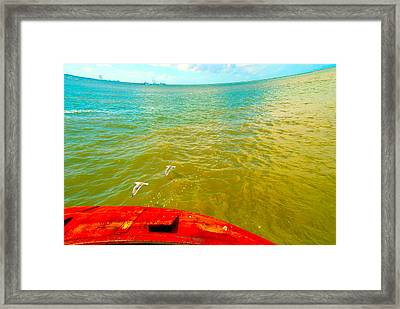 Riding The Wind - A Birds View Framed Print by Max Mullins