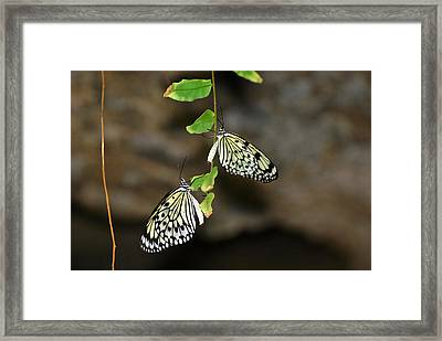Framed Print featuring the photograph Right And Left Wings by Teresa Blanton