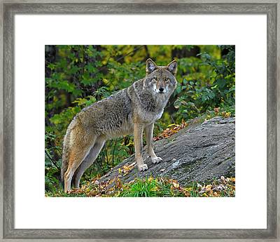 Right Angle Framed Print by Tony Beck