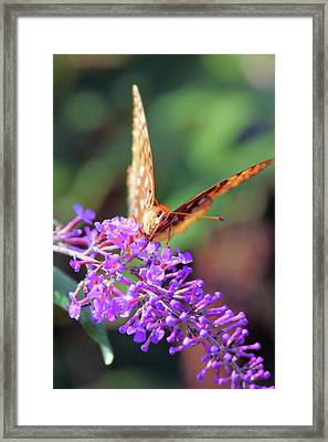 Right At You Framed Print by Karol Livote