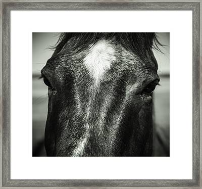 Right Between The Eyes Framed Print