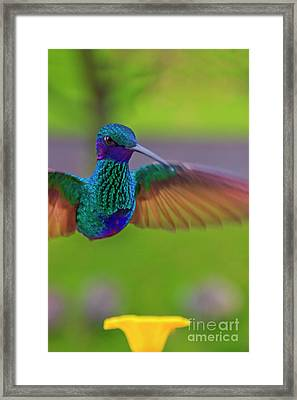 Right In Your Face Framed Print