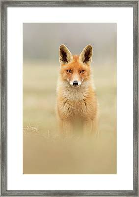 Right Into Your Soul - Red Fox Framed Print by Roeselien Raimond
