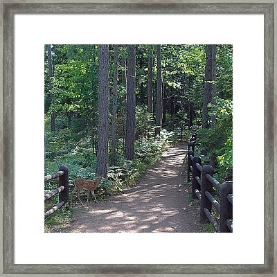 Right Of Way Framed Print