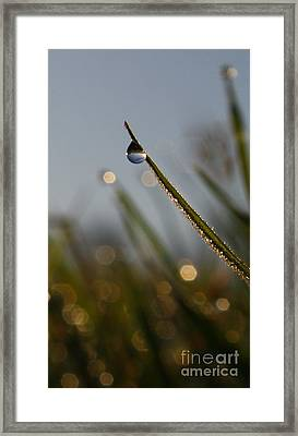 Right Side Down Framed Print by Laura Horgan