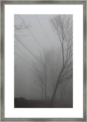Right Thru The Trees Framed Print by Karol Livote