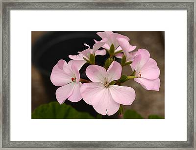 Ring Around The Rosy Framed Print