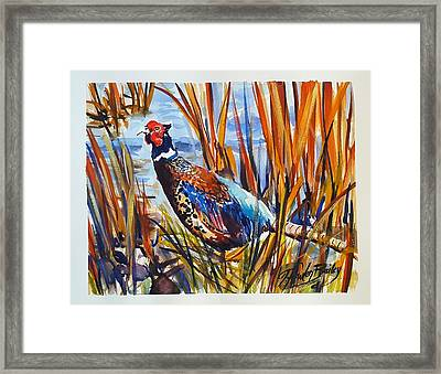 Ring Neck Pheasant By Tfb Framed Print by Therese Fowler-Bailey