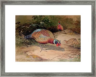 Ring Necked Pheasant Framed Print by Joseph Wolf