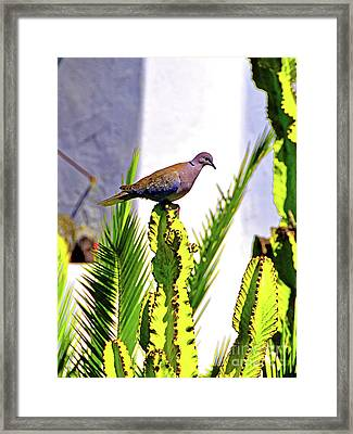 Resting Ring Necked Turtle Dove Framed Print by Wilf Doyle
