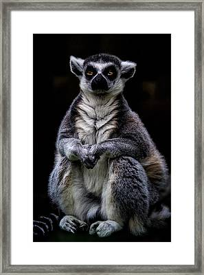 Framed Print featuring the photograph Ring Tailed Lemur by Chris Lord