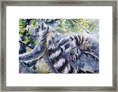 Ring-tailed Lemurs 13 Framed Print
