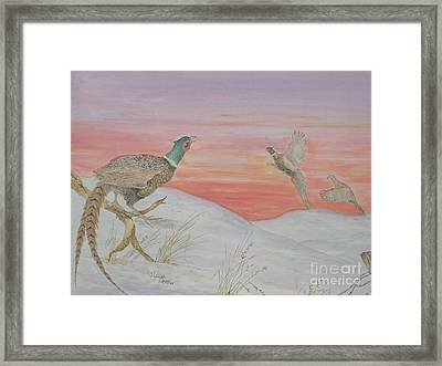 Ringnecks At Sunrise Framed Print