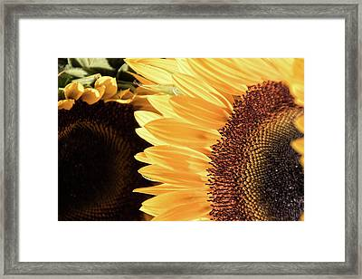 Rings And Things - Framed Print