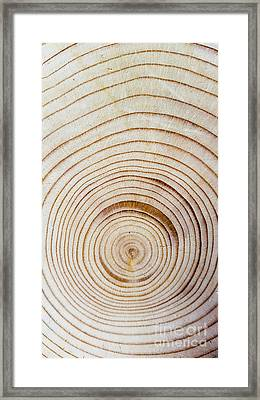 Rings Of A Tree Framed Print