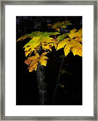 Rings Of Green And Drown Framed Print by Ken Day