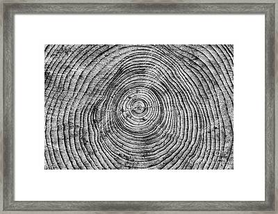 Rings Of Growth Framed Print by Tim Gainey