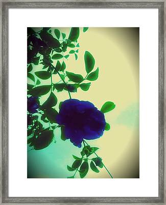Rinse Gently And Hang To Dry Framed Print by Jenn Beck