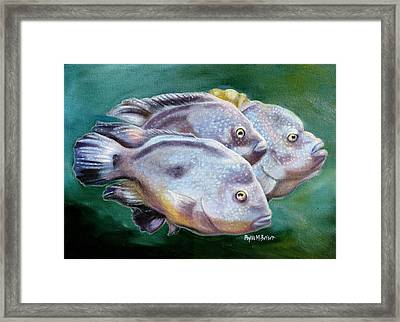 Rio Grande Cichlids Framed Print by Phyllis Beiser