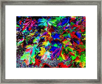 Riot Of Color Framed Print by Will Borden