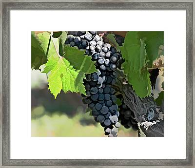 Ripe And Ready Framed Print