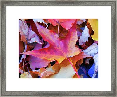 Ripe For Halloween Framed Print by Lanjee Chee