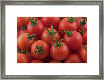 Framed Print featuring the photograph Ripe Garden Cherry Tomatoes by James BO Insogna