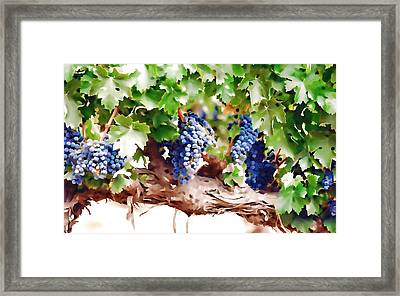 Ripe Grapes Moldova Framed Print by Lanjee Chee