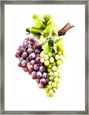 Ripe Red And Green Grapes  Framed Print by Lanjee Chee