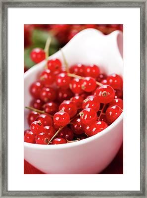 Ripe Red Currant Berries Framed Print by Natalia Klenova