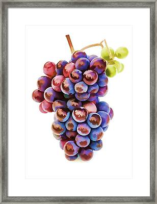 Ripe Red Grapes  Framed Print by Lanjee Chee