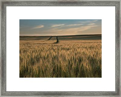 Ripening Wheat No. 1 Framed Print by Al White
