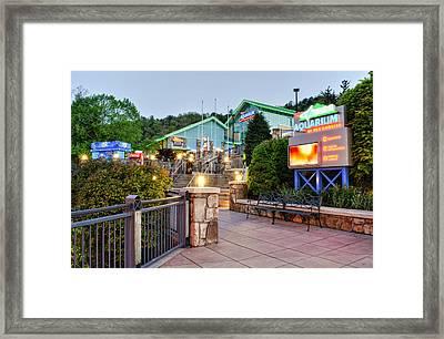 Ripley's Aquarium Of The Smokies Framed Print