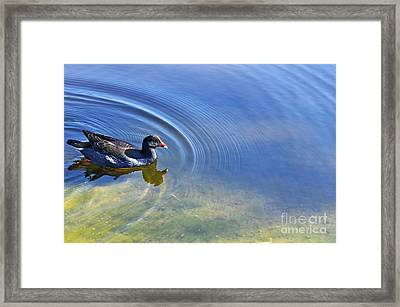 Ripples And Seaweed Framed Print by Kaye Menner