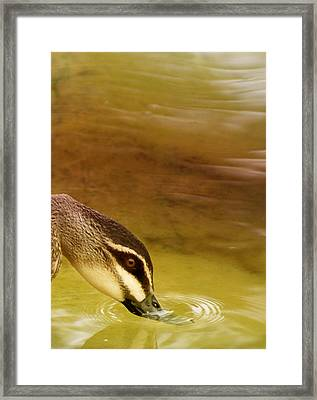 Ripples Framed Print by Holly Kempe
