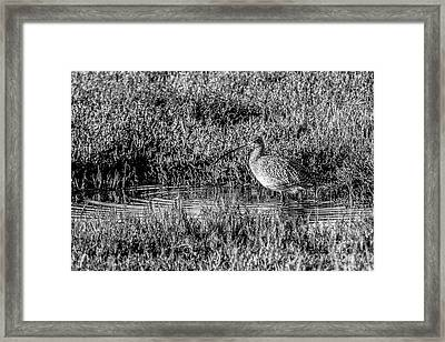 Camouflage, Black And White Framed Print