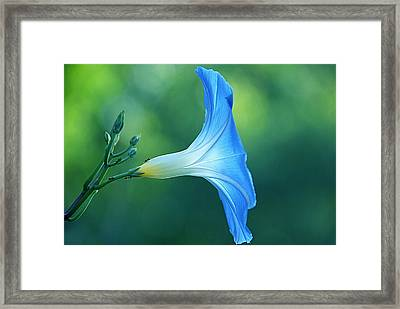 Framed Print featuring the photograph Rise And Shine by Byron Varvarigos