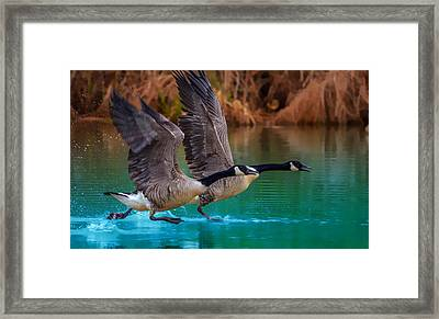 Rise Of Flight Framed Print by Brian Stevens