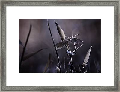 Rise Of The Guardian Framed Print by Fabien Bravin