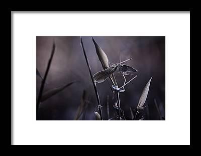 Grasshopper Framed Prints