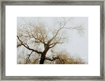 Framed Print featuring the photograph Rising by Iris Greenwell
