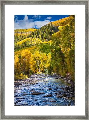 River And Aspens Framed Print by Inge Johnsson