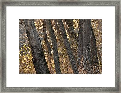 River Bank Framed Print by Gerald Hiam