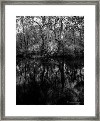River Bank Palmetto Framed Print
