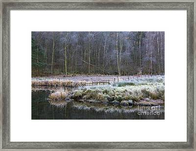 River Brathay Reflections And Silver Birch Framed Print
