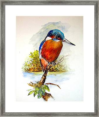 River Kingfisher Framed Print